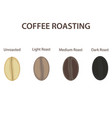 coffee beans set showing various stages of vector image