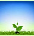 green grass with young plant vector image vector image
