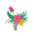 hibiscus lavender hand drawn tropical flower vector image