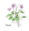 beautiful violets for bouquet on white background vector image