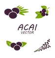 Acai icons set vector image