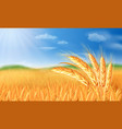 summer landscape with a field of ripe wheat and vector image