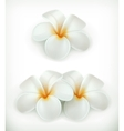 White flowers icons vector image vector image