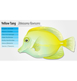 Yellow Tang vector image