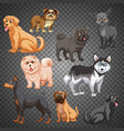 set different dogs isolated vector image