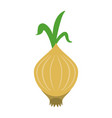 garlic food flat vector image vector image