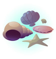 seashell set vector image