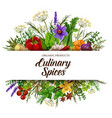 spices and herbs with vegetable food condiments vector image vector image