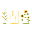 wheat field sunflower icon cartoon vector image