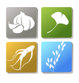 garlic ginseng vector image