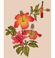 Hibiscus Flower Sketch vector image