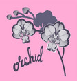 orchid flowers on ping background and hand drawn vector image