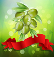 olive branch with red ribbon on a green background vector image