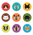Cat design vector image