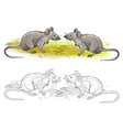 rat mouse hungry wheat grain coloring book art vector image
