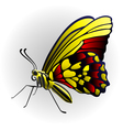 butterfly on the with background vector image vector image