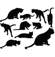 cat collection - vector image vector image
