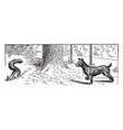 dog and squirrel vintage vector image vector image