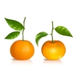 Fresh tangerine fruits with green leaves vector image vector image