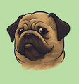 pug dog portrait vector image vector image