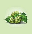 realistic beer green hop cones leaves with vector image vector image