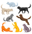 set stylized cats in various poses vector image