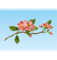 spring blossom vector image vector image