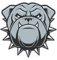 The head of a fierce bulldog vector image vector image