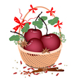 A Brown Basket of Christmas Apples and Spices vector image vector image