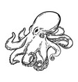 hand drawn octopus isolated on white background vector image vector image