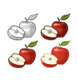 apple whole and half with leaf vintage color vector image vector image