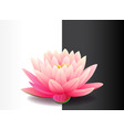 beautiful realistic pink lotus flower isolated vector image