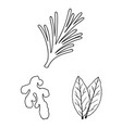 herb and spices outline icons in set collection vector image vector image