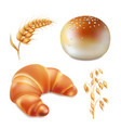 bun and croissant bread and bakery realistic vector image vector image
