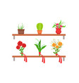 collection potted house plants and beautiful vector image