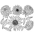 simple hand drawn astra and sunflower flowers set vector image vector image