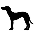 deerhound vector image vector image