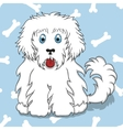 Seamless pattern with white fluffy dog vector image vector image