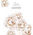 watercolor white roses isolated beautiful vector image vector image