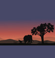 Africa landscape with elephant silhouette vector image vector image