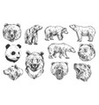 bear grizzly and panda sketches vector image vector image