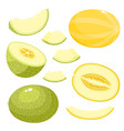 bright set of juice melon isolated on white vector image