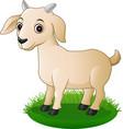cartoon goat vector image