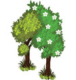 isometric cartoon bushy green trees web element vector image vector image
