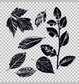 set leaves different vegetation vector image