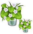White flowers with green leaves in glass vase vector image vector image