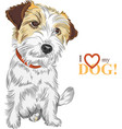 wire-haired dog Jack Russell Terrier vector image vector image