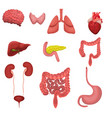 a set human organs image isolated on white vector image