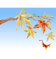 branch of maple with autumn leaves vector image vector image