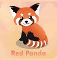 cute red panda vector image